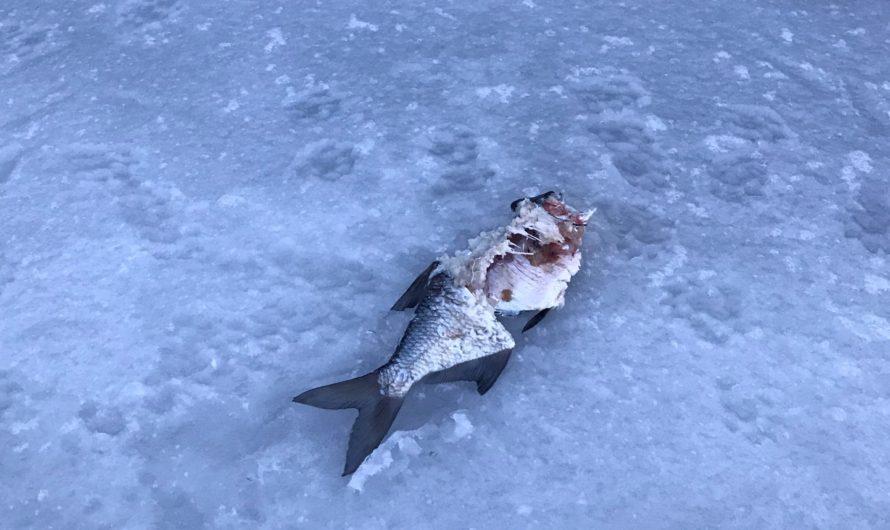 Když ještě v Čechách žili obři a byla otevřená Mrtvá ryba