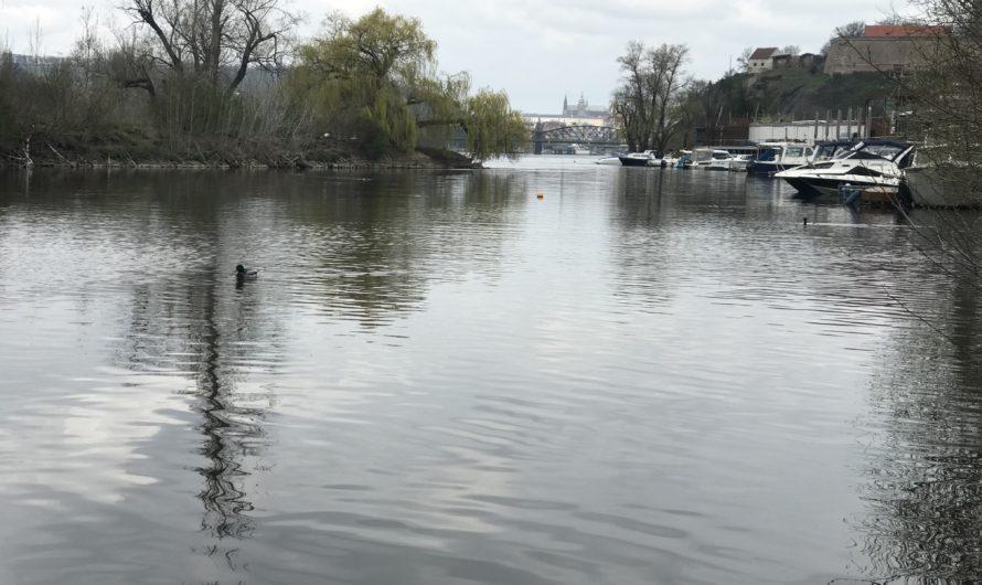 Výřad kachen neboli suchozemské zakončení bruslařské sezóny v pátek, 23. dubna